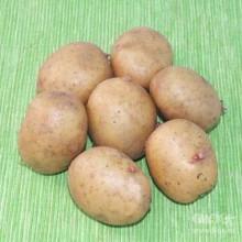 Картофель семенной Аврора