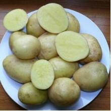 Картофель семенной Моделина