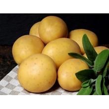 Картофель семенной Модейра