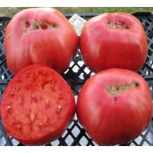 Редкие сорта томатов Дед Эшлок