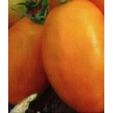 Редкие сорта томатов Фрегат