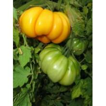 Редкие сорта томатов Инжир желтый