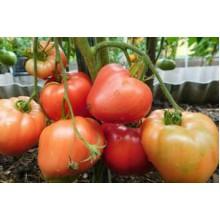 Редкие сорта томатов Мазарини