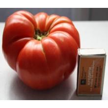 Редкие сорта томатов Азорский Красный Невеса