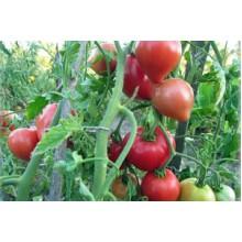 Редкие сорта томатов Батяня