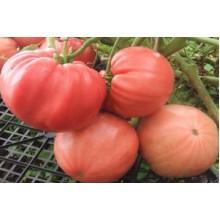 Редкие сорта томатов Болгарская Хала