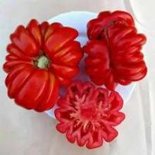 Редкие сорта томатов Веселый Сосед
