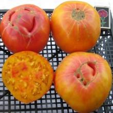 Редкие сорта томатов Вифлиемский Огонь