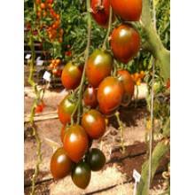 Редкие сорта томатов Гранатовая Капля