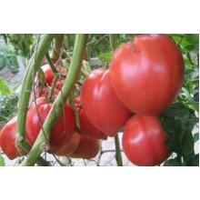 Редкие сорта томатов Египетская Ладья