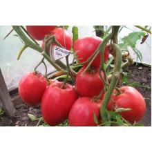 Редкие сорта томатов Кенигсберг