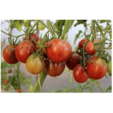 Редкие сорта томатов Копыто Кабана