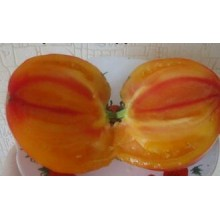 Редкие сорта томатов Оранжевый Русский 117