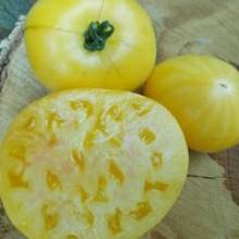 Редкие сорта томатов Подъемный Желтый