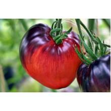 Редкие сорта томатов Сержант Пепперс