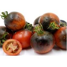 Редкие сорта томатов Синий шоколад