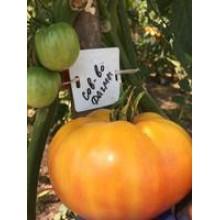 Редкие сорта томатов Совершенство Дагма