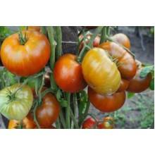 Редкие сорта томатов Тасманский шоколад